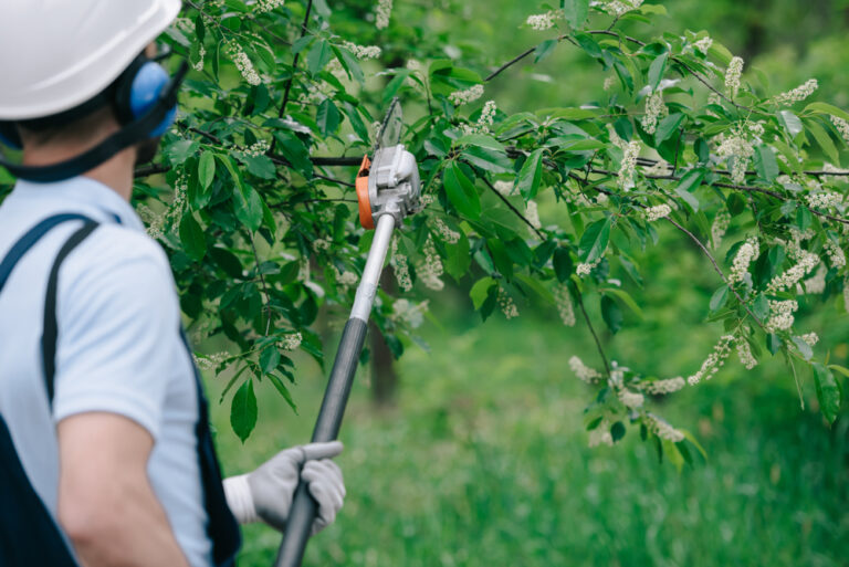 Tree trimming and pruning aquasco