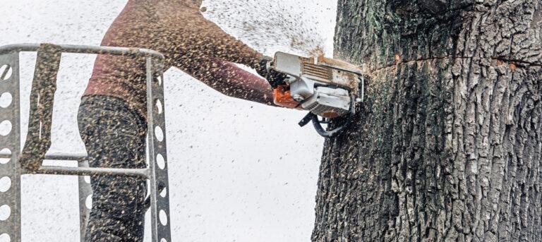 dangerous high risk tree removal aquasco
