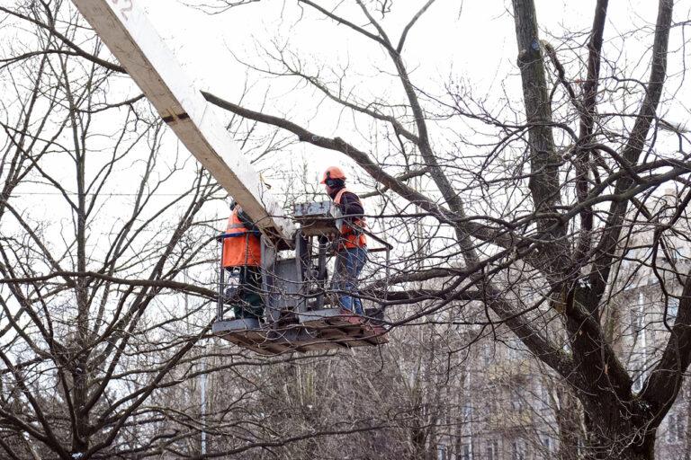 tree maintenance safety procedures maryland
